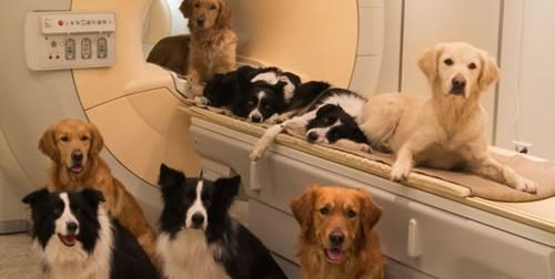 MRI Dogs